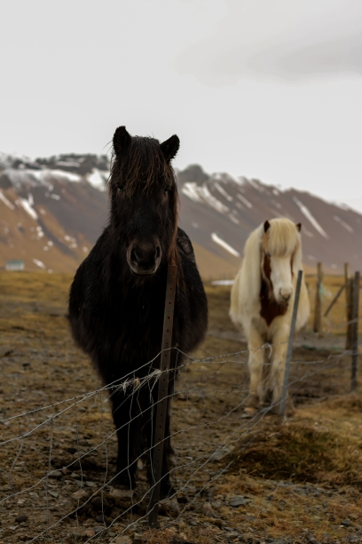 iceland. (12 of 17)